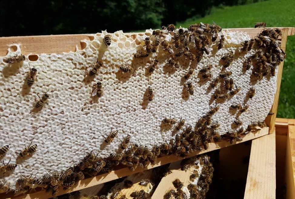 Initiative-Honigbiene bei zinsBewusst